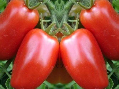 Pomodori San Marzano per sugo